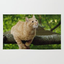 Photograph of a Cat hanging on a Limb Rug