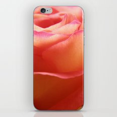 Two-Tone Roses #3 iPhone & iPod Skin