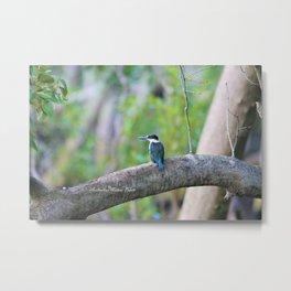 Collared Kingfisher Metal Print