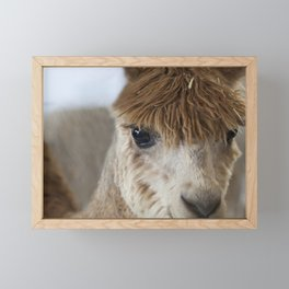 Little Brown Alpaca Framed Mini Art Print