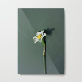 Single narcissi Metal Print