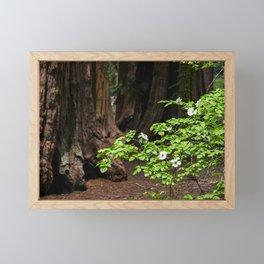 Flowering Dogwood & Sequoia Trees, McKinley Grove, California Framed Mini Art Print