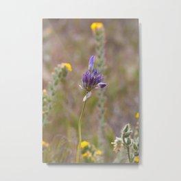 Lonely Wildflower Metal Print