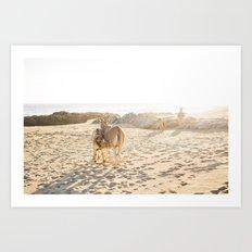 Baja donkeys Art Print