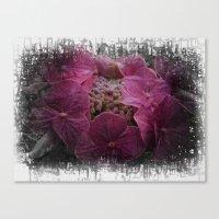 hydrangea Canvas Prints featuring Hydrangea by Paul & Fe Photography