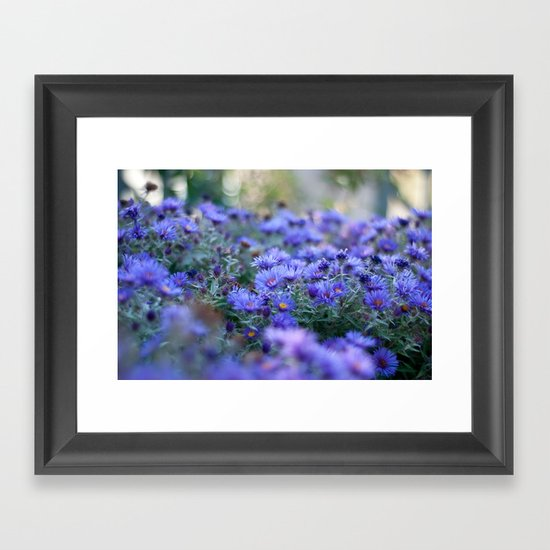Sea of Asters Framed Art Print