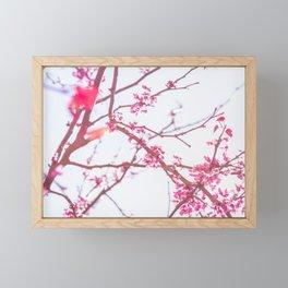 Nature photography pink blossom II Framed Mini Art Print