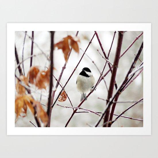 Chicka Chickadee Art Print