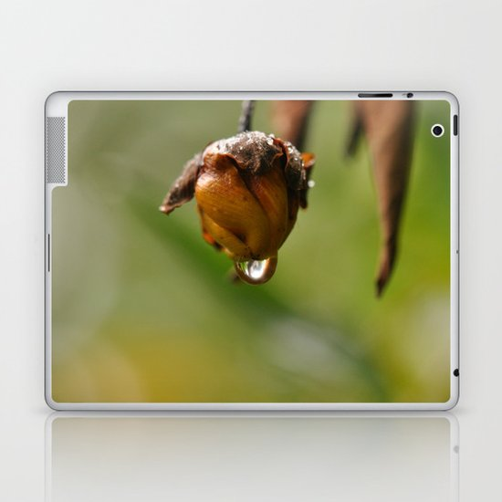 Macro Acorn Laptop & iPad Skin