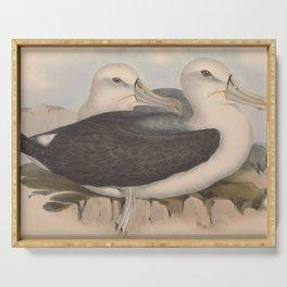 Cautious Albatros, diomedea cauta3 Serving Tray