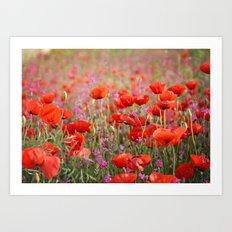 Poppies in Spring Art Print