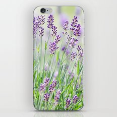 Lavender in summer garden iPhone & iPod Skin
