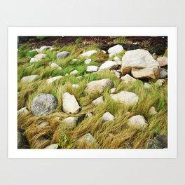 Maine Seagrass Art Print