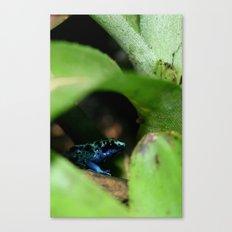 Poison Dart Frog- Dendrobates Azureus Canvas Print