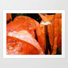 Tangerine Dreams Art Print