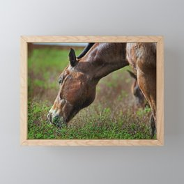 Grazing on the Estate Framed Mini Art Print