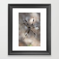 Spider 1 | Picture A Framed Art Print