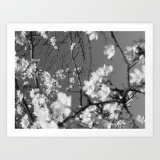 Places in Black & White: Plum Tree 2 Art Print
