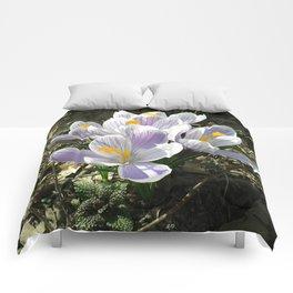 Spring crocus flowers Comforters