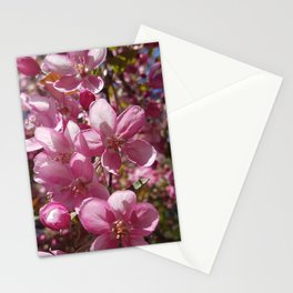Pink Apple Blossoms in Spring Stationery Cards