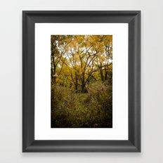 Walk Through Fall Framed Art Print