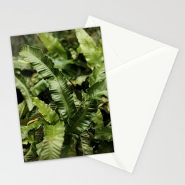Beautiful Green Leaves  | Pop Color | Nature Photography | Fine Art Photo Print Stationery Cards