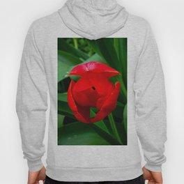 Tulip in Bloom Hoody