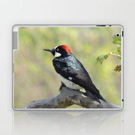 Acorn Woodpecker At Rest Laptop & iPad Skin