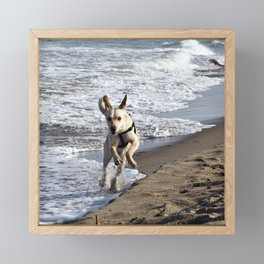 Flying Dog of Catania Beach in Sicily Framed Mini Art Print