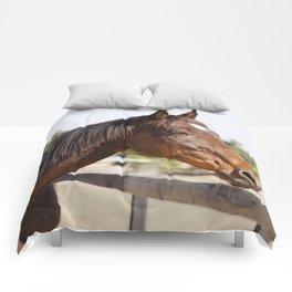 Handsome Gulliver Comforters