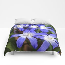 Early Spring Blue - Chionodoxa Comforters
