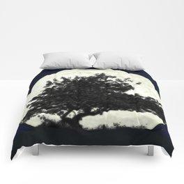'I have fallen a long way' Comforters
