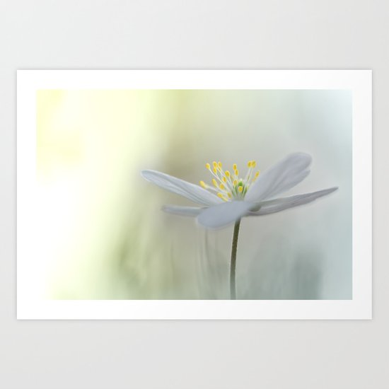 Irresistible Wood Anemone.... Art Print