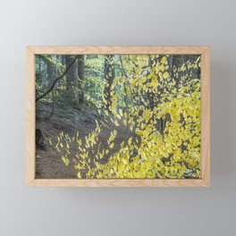 A Splay of Fall Leaves on a Forest Trail Framed Mini Art Print