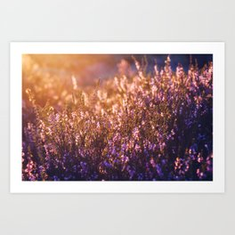 golden heather Art Print