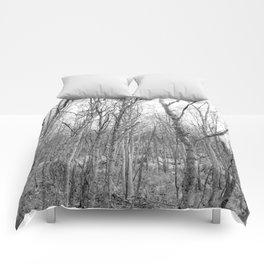 Silver Birches Comforters