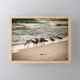 Birds on the Beach of Anna Maria Island Framed Mini Art Print