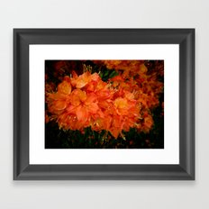 Give me an Orange, Julius Framed Art Print