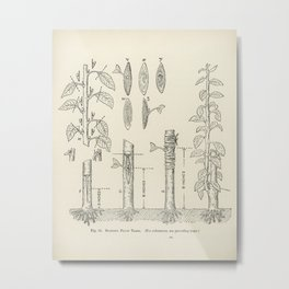 The fruit grower's guide  Vintage illustration of trees Metal Print