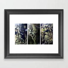 Lichen - Triptych Framed Art Print