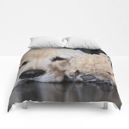 Golden Retriever with Best Friend Comforters