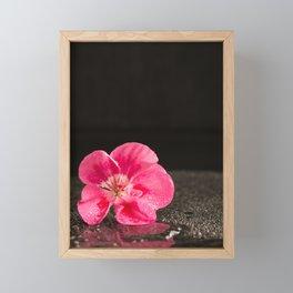 Geranium flower - shining in the dark Framed Mini Art Print