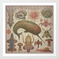 Marine Curiosities I Art Print