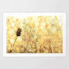 Blazing Meadow Art Print
