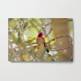 Hummingbird Beauty Metal Print