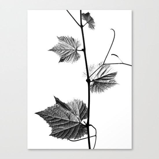 wine leaf abstract III Canvas Print