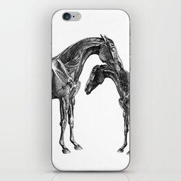 Horsy Horsy iPhone Skin