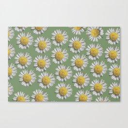 pastel daisy mania Canvas Print