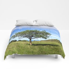 The Lonely Tree Comforters