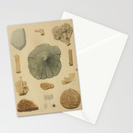 Coral Fossils Stationery Cards
